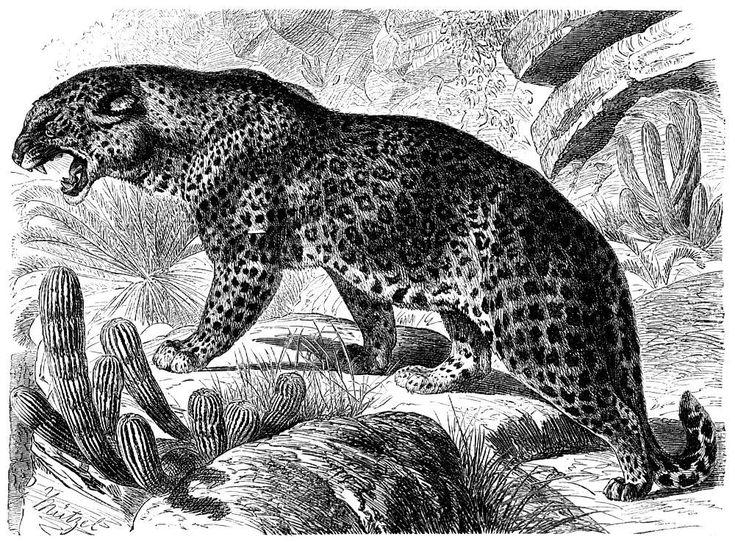 leopard.jpg (1000×737)