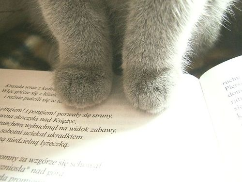 once more - Clea!:) her paws are soo adorable!