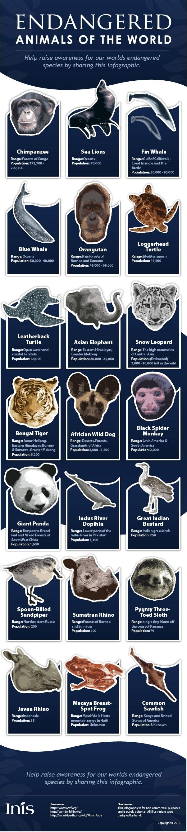 The 21 Most Endangered Animals In The World