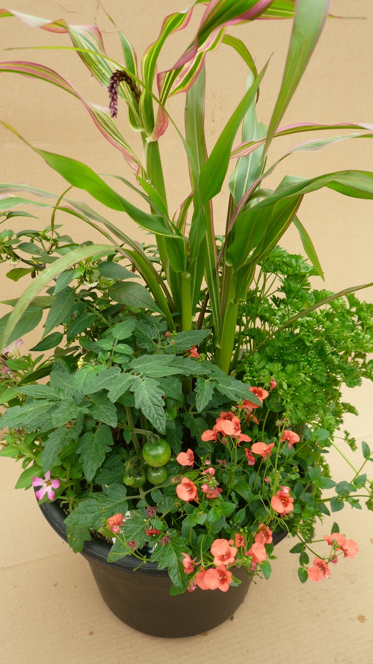 Ornamental edible container features diascia sunrise for Ornamental garden features