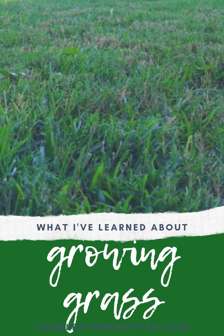 What I Ve Learned About Growing Grass Growing Grass Grass Seed Planting Grass