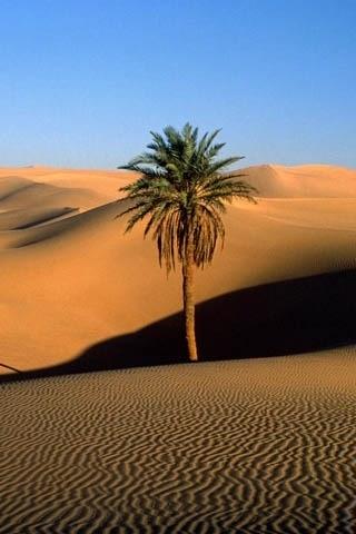 dov'è l'oasi? #palmtree #desert