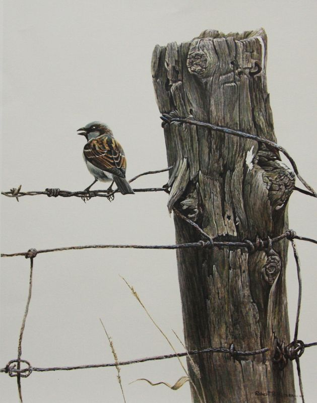 Robert Bateman House Sparrow