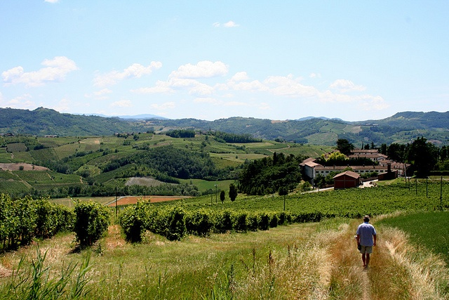 Walking in the vineyards by duepadroni, via Flickr