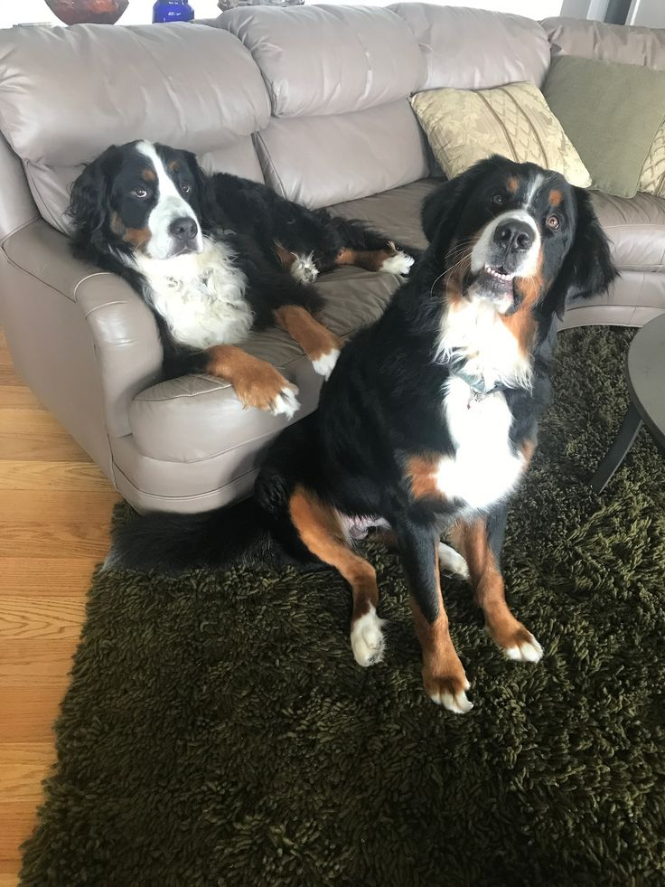 three berners — that face lol.