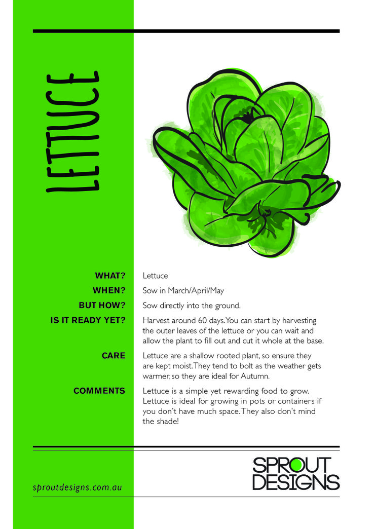 How to grow Lettuce!