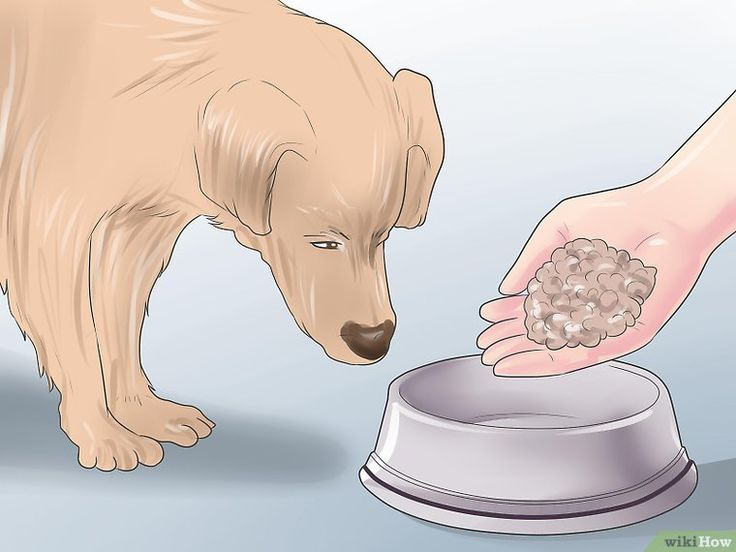 Heal a torn dog acl without surgery in 2020 dog remedies