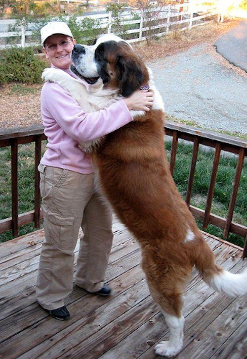 Big Dogs Give Good Hugs (Photos)