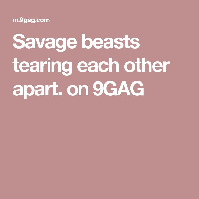 Savage beasts tearing each other apart. on 9GAG