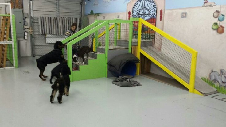 mori playing with the dogs on the jungle gym doggie