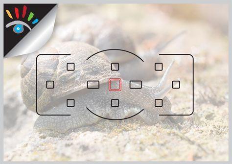Scherpstelling en (auto)focus. De algemene term voor automatisch scherpstellen is autofocus, AF genoemd, er kan ook nog met de hand worden scherpgesteld als dat wenselijk zonet noodzakelijk is, dit gebeurd vaak bij macro- of stillevensfotografie. De eerste autofocussysteem werd door Polaroid op de markt gebracht, in de jaren zestig. Een van de belangrijkste kenmerken van een foto is de scherpte, het oog wordt direct getrokken naar het scherpe deel van de foto. http://markrademaker.nl