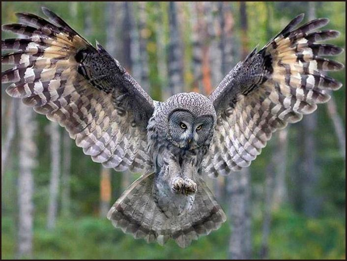 113 best images about owls in flight on Pinterest  Owl patterns