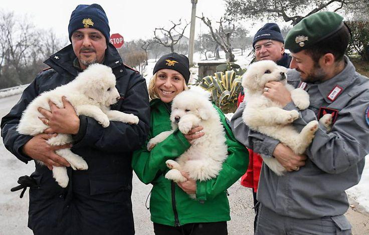 Três filhotes de cães foram resgatados nesta segunda-feira (23) dos escombros do hotel Rigopiano, na cidade de Farindola, na Itália, soterrado na noite do ú...