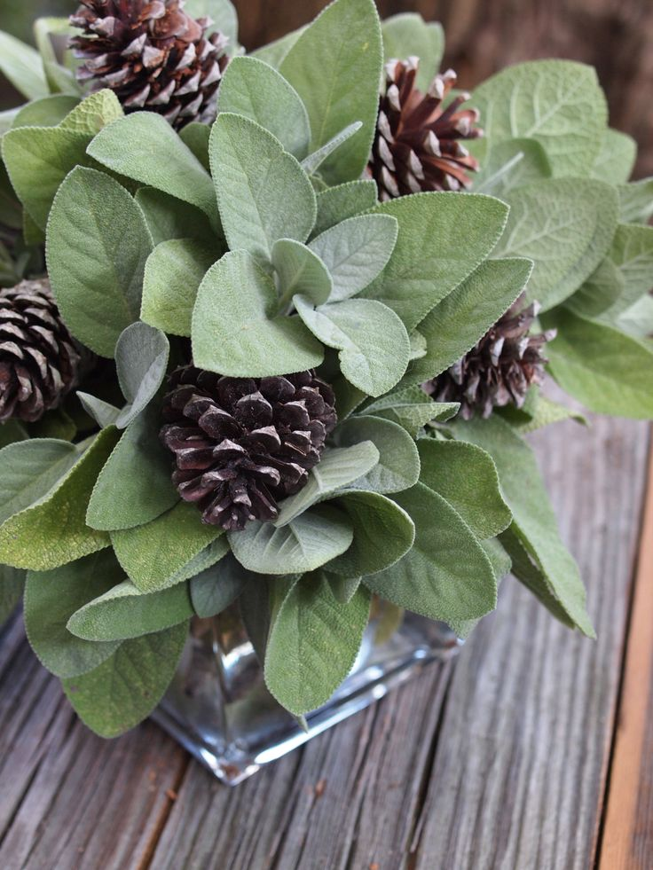 add down coat Sage  amp  pine cones are a simple mix on a rustic holiday table