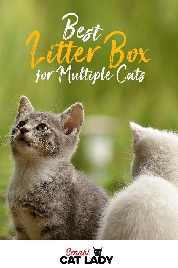 Best Litter Box For Multiple Cats Best Cat Litter Best Litter Box Cats