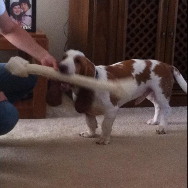 Doggie dumbell