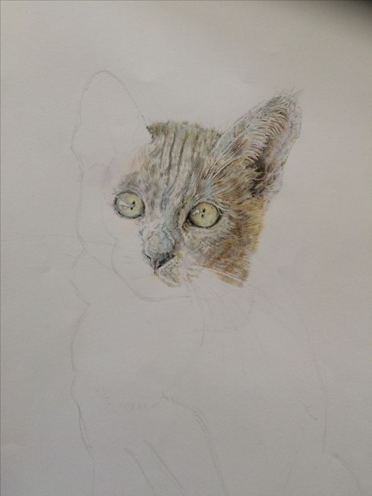Kitten coloured pencil cat drawing