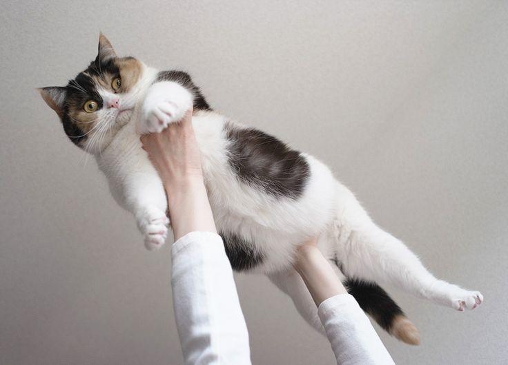cats in spaaaaace