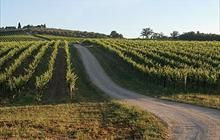 Tuscany | Italy  | Best wine routes