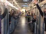 Colorado Springs animal shelter celebrate after all of its dogs are adopted before Christmas -     Staff at an animal shelter were pictured celebrating in empty cages after all of its dogs were adopted in time for Christmas.     The staff at the... See more at https://www.icetrend.com/colorado-springs-animal-shelter-celebrate-after-all-of-its-dogs-are-adopted-before-christmas/