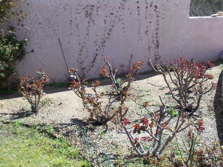 01 29 2016   Potted Desert Garden Care In February