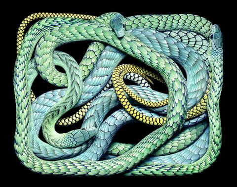Breathtaking snakes photographed by Guido Mocafico