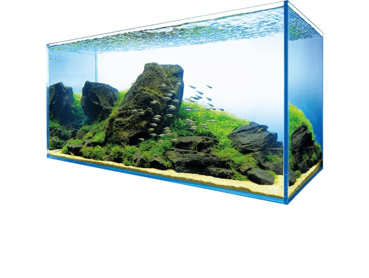 ADA designs and develops products of aquarium, lighting and CO2 supply system to propose Nature Aquarium where tropical fish swimming in densely grown aquatic plants.
