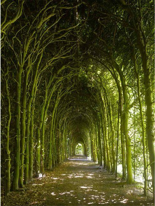 Tree tunnel.     Weldam Castle,Overijissel,Netherlands