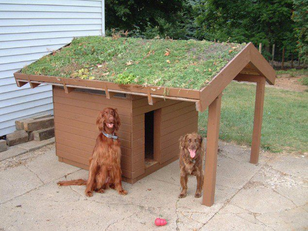 The Ultimate Luxurious Dog Houses