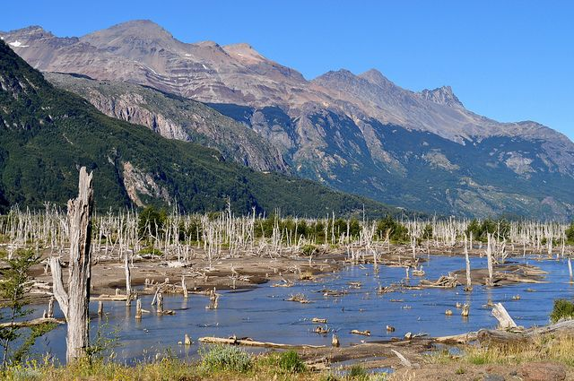 Bosque Muerto - Patagonia Chilena | Flickr - Photo Sharing!