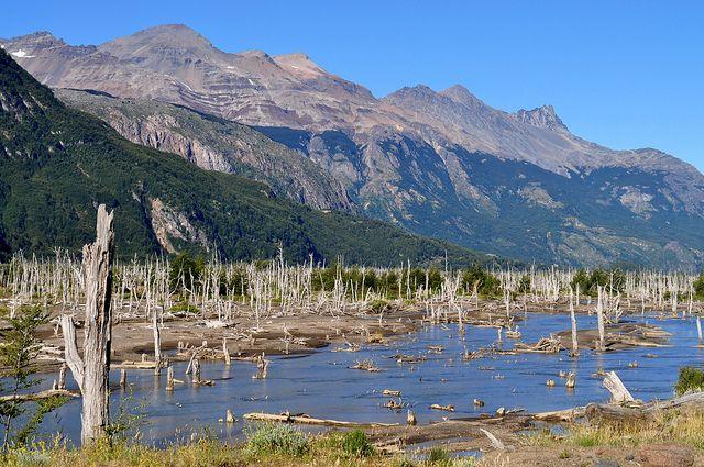Bosque Muerto - Patagonia Chilena | Flickr - Photo Sharing!