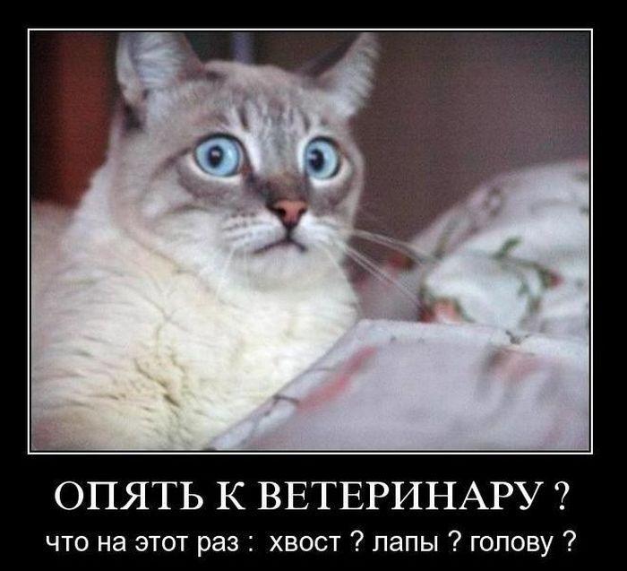 Демотиваторы :)