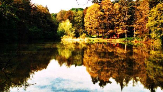 Il Parco dei Boschi di Carrega, Parma, Italy