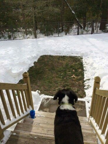 Put down a tarp before snow starts then remove and have a dedicated potty spot til the snow melts!  Brilliant!