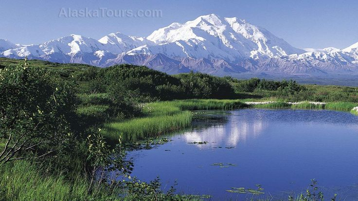 Http://www.bing.com/images/search?q=Denali National Park