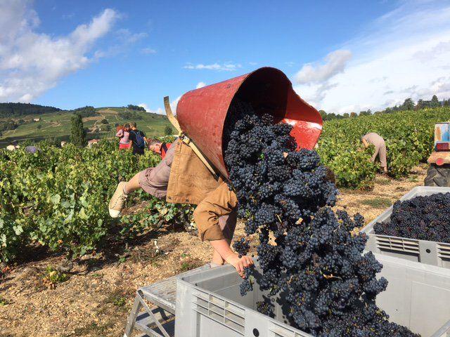 Vins de Pizay (@VPizay) on Twitter
