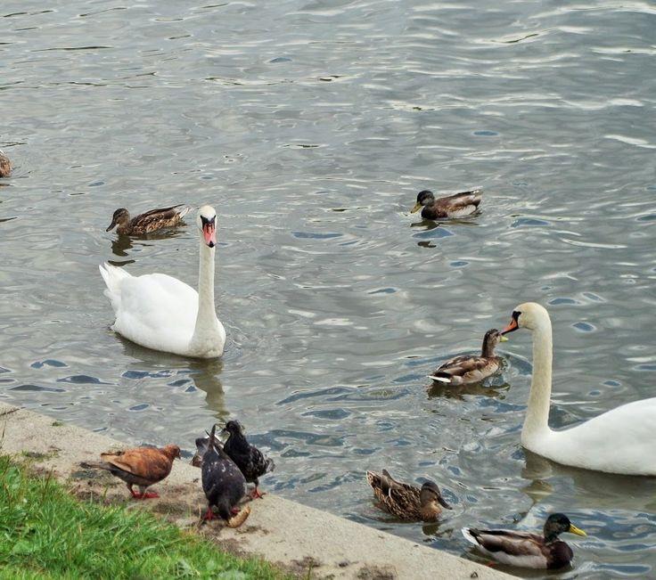 Nad Wisłą.... Vistula River