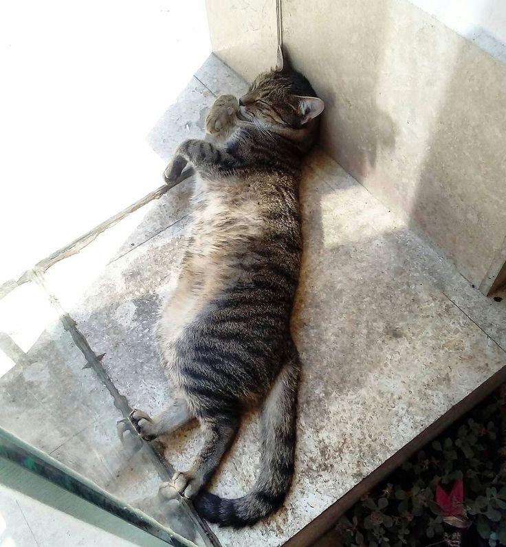 Grigore the cat