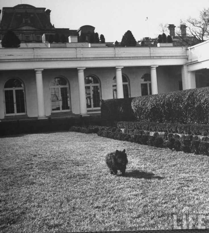 1000+ images about Scottie Dogs: Falla on Pinterest 1940s White House Scottie