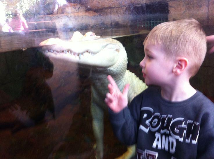 Newport aquarium in Kentucky