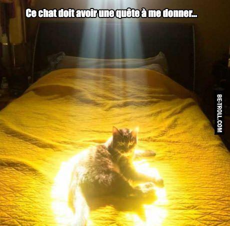 Ce chat doit avoir une quête à me donner...