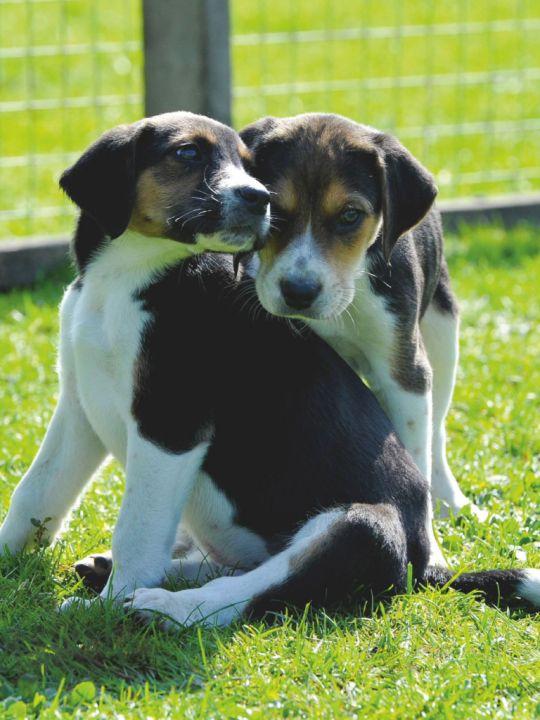 ディーンとサム 犬版