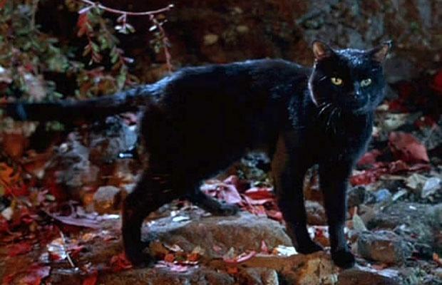 Thackery Binx the Black Cat from Hocus Pocus