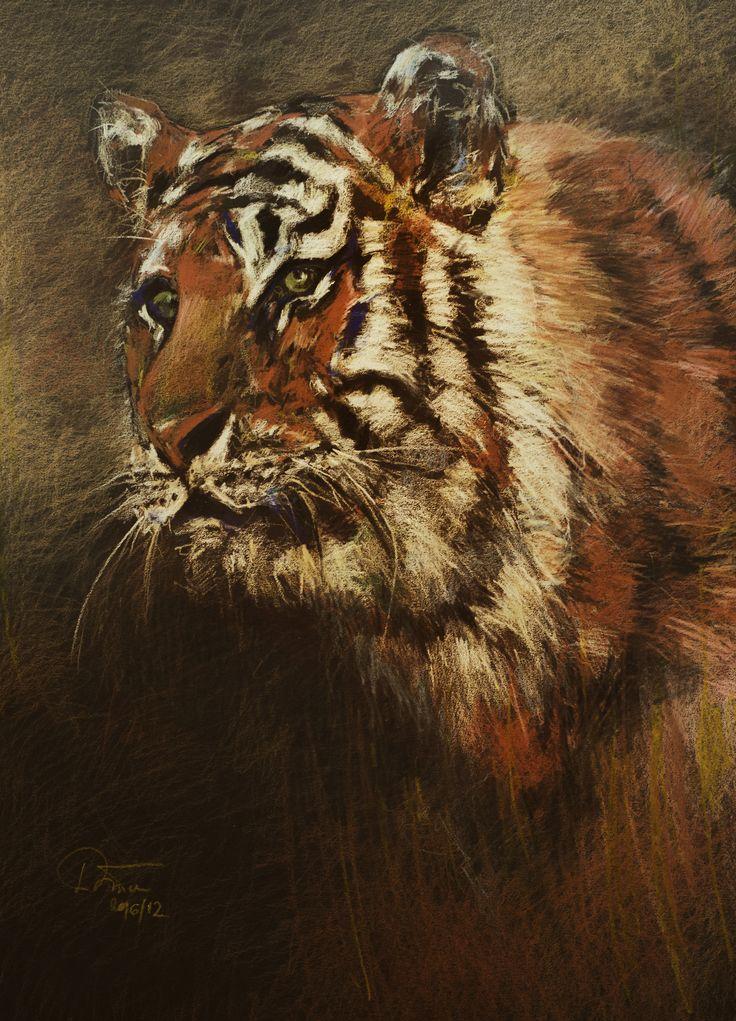 Tiger (Colored Pencils Prismacolor)