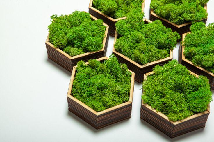 Honeycomb Live Moss, Laser Cut Wood Art, Moss Art, Wedding