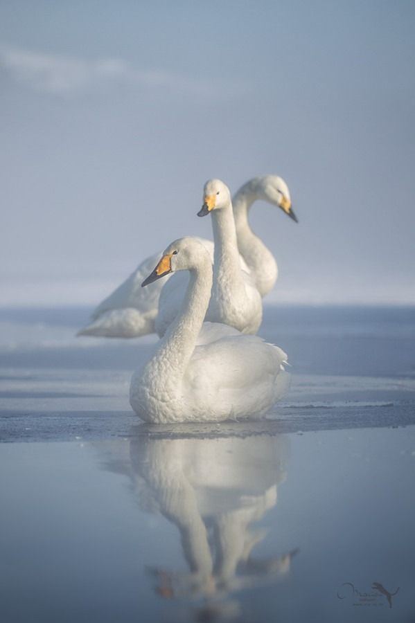 """musts: """" three by Marion Vollborn """""""