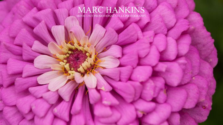 http://marchankins.files.wordpress.com/2013/03/flower8.jpg