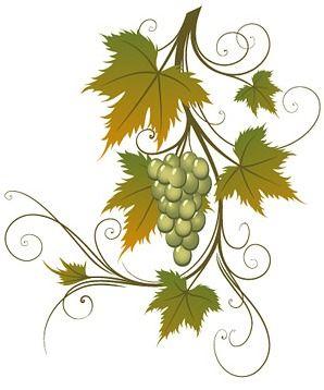 viñedo de uvas dibujo
