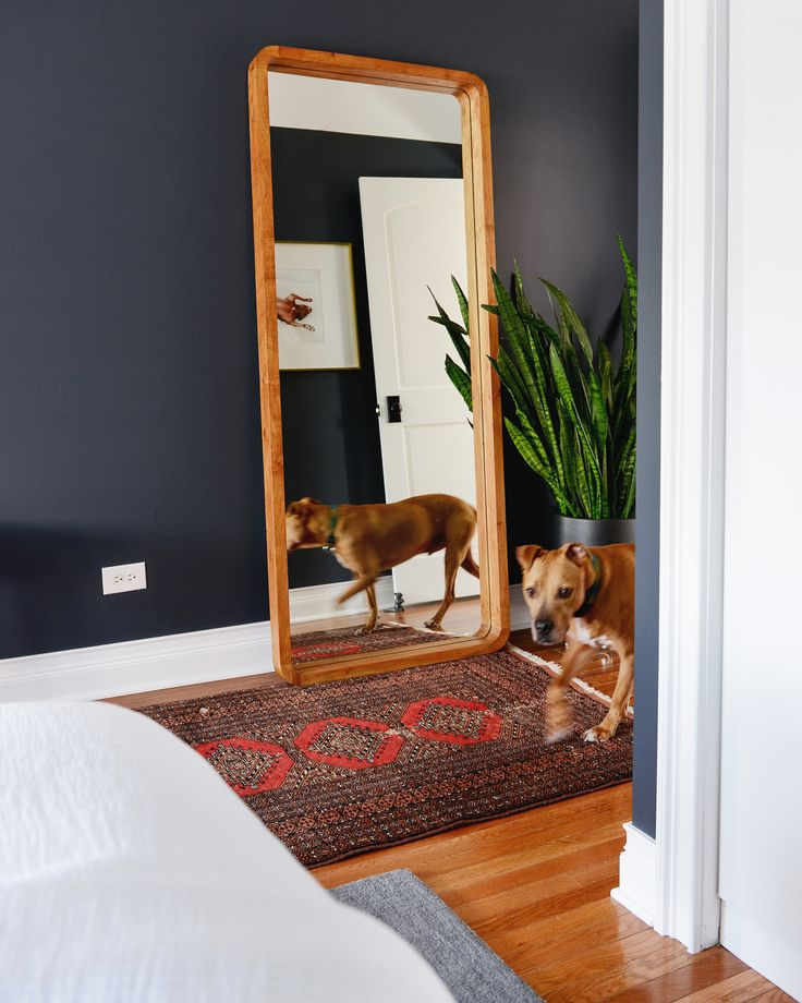 1000 images about bedrooms on pinterest blue duvet for Crate and barrel dog bed