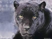 animales hermosos del mundo - Buscar con Google